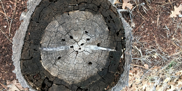 Tree rings, photo by Alan Levine