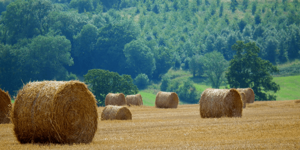 Bales of hay, photo by Plbmak