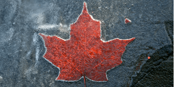 Frozen maple leaf, photo by Aaron Poach