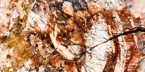 Petrified wood rings, photo by Klop Pe