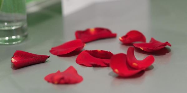 Rose petals, photo by tommpouce