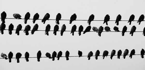 Birds, photo by Gustavo Gomes
