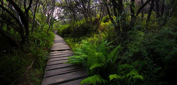 Forest boardwalk, photo by Adam Campbell