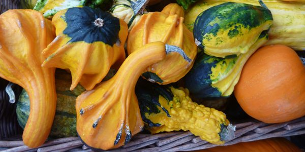 Gourds, photo by Rebecca Siegel