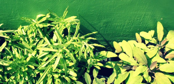 Herbs, photo by En Bouton