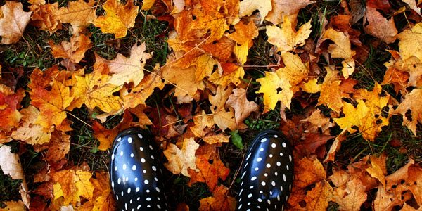 Fallen leaves, photo by Leigh Ann