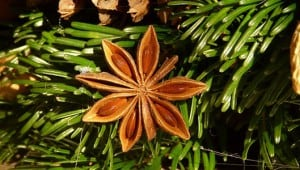 Star anise wreath, image by Hans