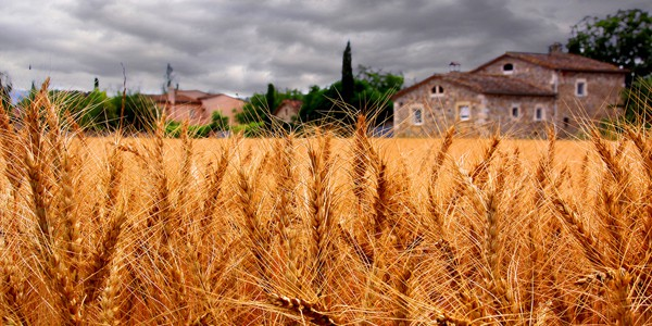Wheat harvest, photo by Bernat Casero